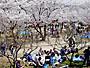 摂津峡桜公園