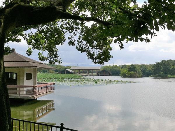大泉緑地の大泉池